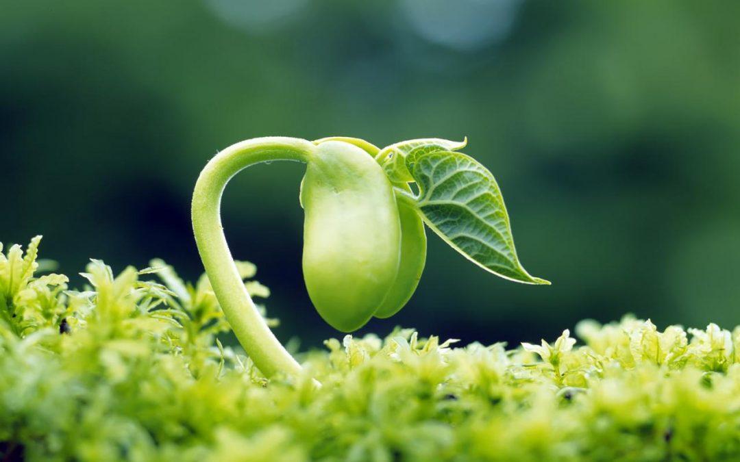De ce este bine sa consumam germeni (sprouts)
